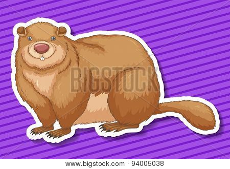 Fat beaver smiling on purple background