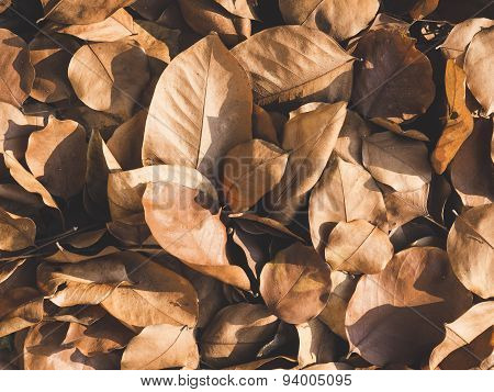 Dried Leaves, Nature Abstract Texture Background