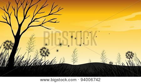 Silhouette field with grass and dry tree
