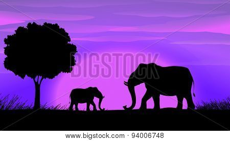 Sihouette elephants in the field