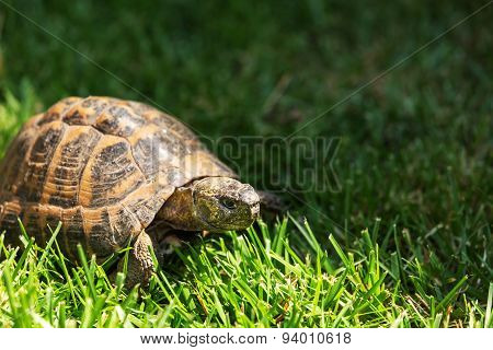 Soil turtle