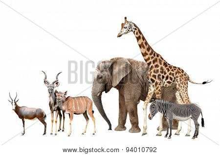 Giraffe, Elephant, Zebra, Blesbok antelopes  and Kudu isolated on white