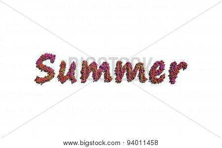 Summer Text Flower With White Background