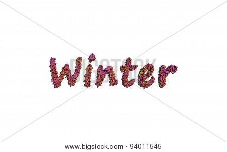 Winter Text Flower With White Background