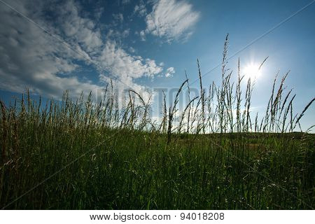 Field Of Green Grass On A Background Of Blue Sky And White Clouds Lighted By The Sun