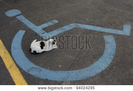 Wheelchair Handicap Sign And Sleeping Cat