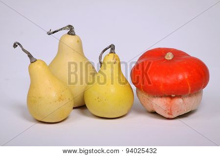 Different Colorful Gourds And Pumpkins