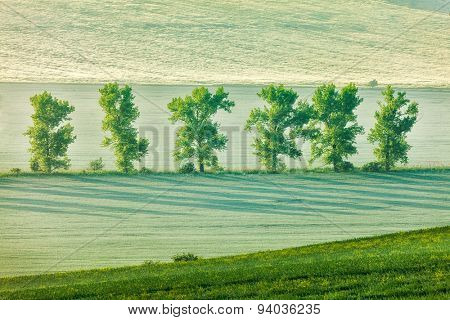 Moravian rolling landscape with trees in early morning haze. Moravia, Czech Republic