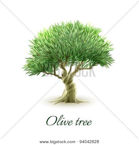 Single olive tree picture print