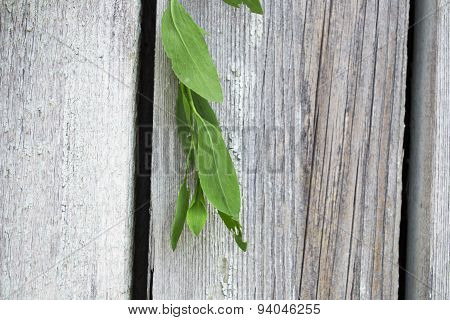 green twigs on wooden boards
