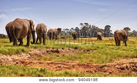 Heard of Elephants Roaming South Africa