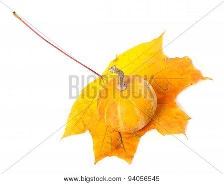 Decorative Pumpkin On Autumn Maple-leaf On White Background