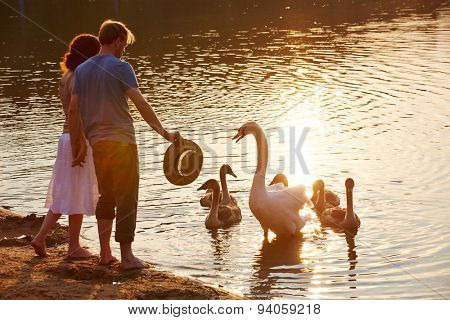Swan defending offspring from people at lake shore