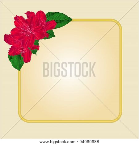 Golden Frame  With Red Rhododendron Vector