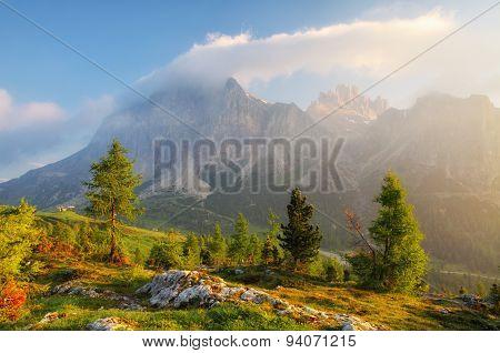 Tree On Sunrise In Background Big Mountain