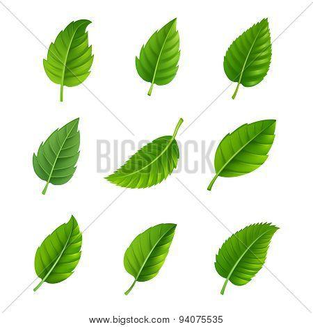 Green leaves decorative set