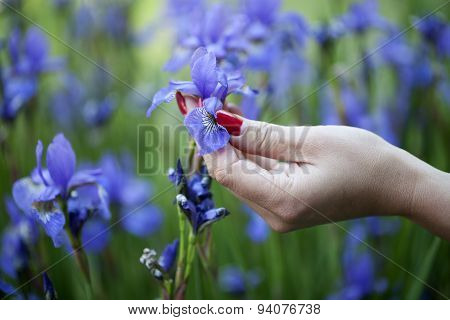 Well-groomed Hand Touching Iris