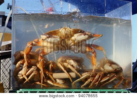 Live Crab for Sale