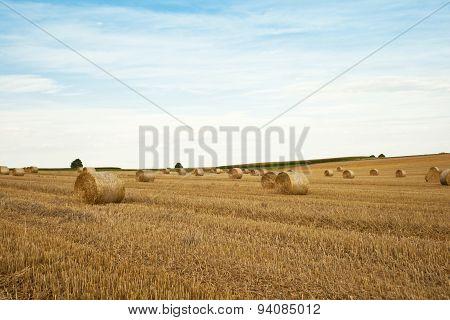 Bales of straw on cornfield