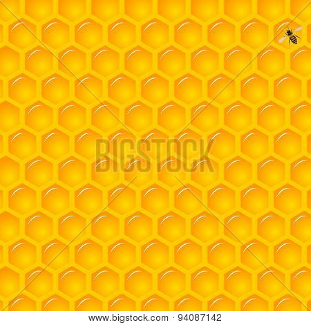 Natural Background with Honeycombs