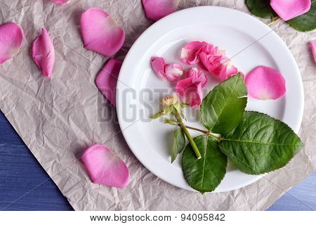 Beautiful pink roses in white plate on parchment, top view