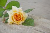 picture of buff  - rose buff beauty peach and apricot on an old wooden board copy space for your text - JPG