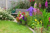 image of digitalis  - Cottage garden with wooden bench and flowers in containers - JPG