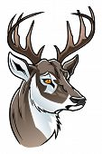 picture of deer head  - Stylized head of deer on the white background - JPG