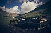 stock photo of pastures  - Mountain landscape with horses - JPG
