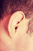 stock photo of human ear  - Human man ear on white background - JPG