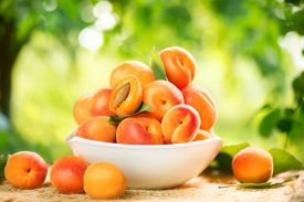 foto of orchard  - Apricot - JPG