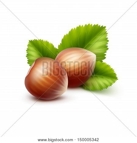 Vector Full Unpeeled Realistic Hazelnuts with Leaves Close up Isolated on White Background