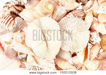 background of different types of sea shells