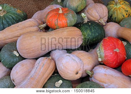 Many Ripe Edible Gourds For Sale In Greengrocers