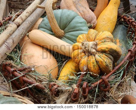Pumpkins For Sale In Greengrocers In Autumn