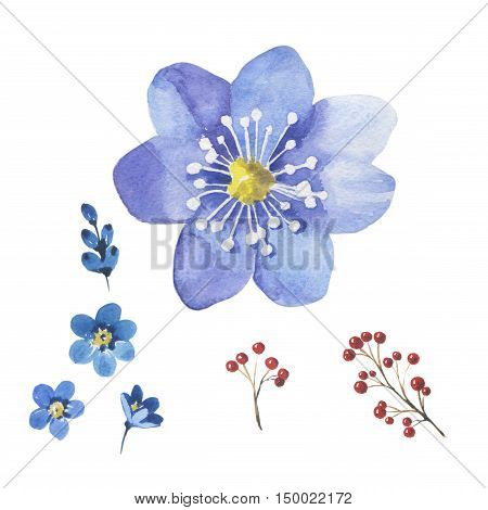 Wildflower myosotis flower in a watercolor style isolated. Full name of the plant: forgetmenot, myosotis. Aquarelle flower could be used for background, texture, pattern, frame or border.