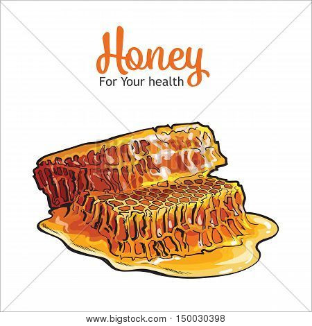 Pair of honeyed honeycombs, sketch style illustration isolated on white background. Appetizing sweet honeycombs full with honey, healthy vegetarian apiary product