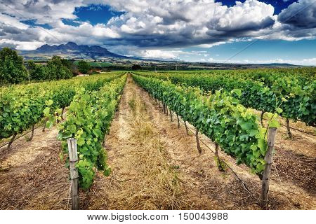 Beautiful vineyard landscape, panoramic view on a great vine valley, autumn season, wine industry in South Africa