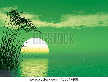 Water plants at sunset - digital artwork.3D rendering