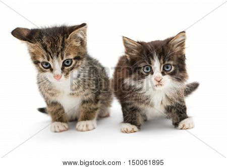 Two little fluffy kitten with big blue eyes isolated on white background