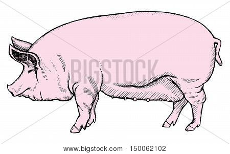 Stylized Pig. Graphic Arts. Farm. Animal. Line Art. Drawing By Hand. Doodle. Tattoo.