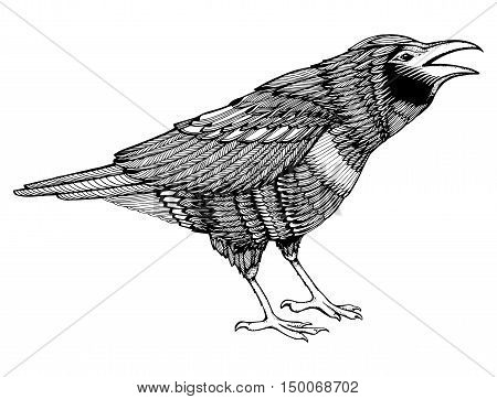 Stylized Crows. Decorative Bird. Line Art. Rook. Black And White Drawing By Hand. Doodle. Zentangle.