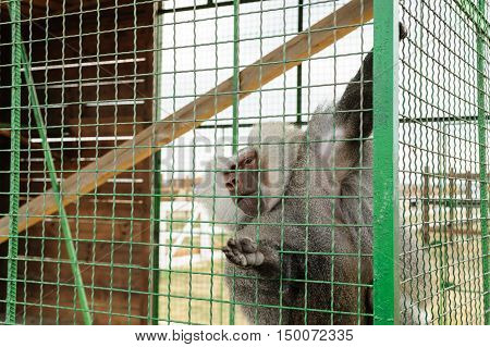 Animals in captivity. Baboon is in the cell.