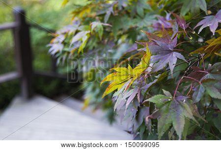 Autumn leaves at the Garden of Morning Calm, South Korea