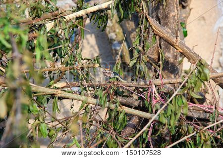 small snake eats a small frog in graden