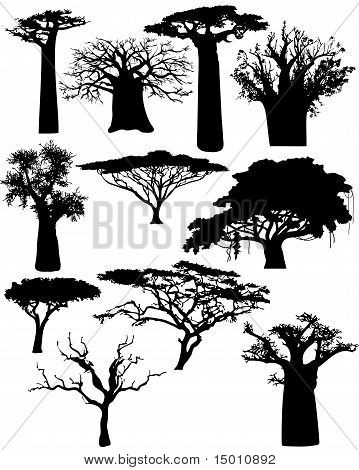 Various African Trees And Bushes
