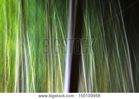 Motion blur bamboo trees in horizontal 3:2 format.