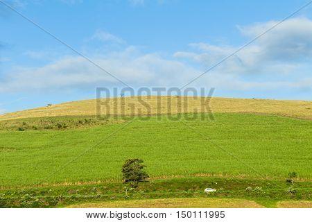 Countryside car travels alongside farmlands hillside landscape.