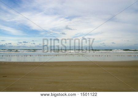 Blue Sky Birds And Beach