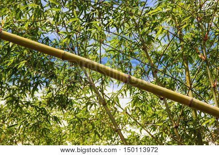 close up bamboo forest natural green background